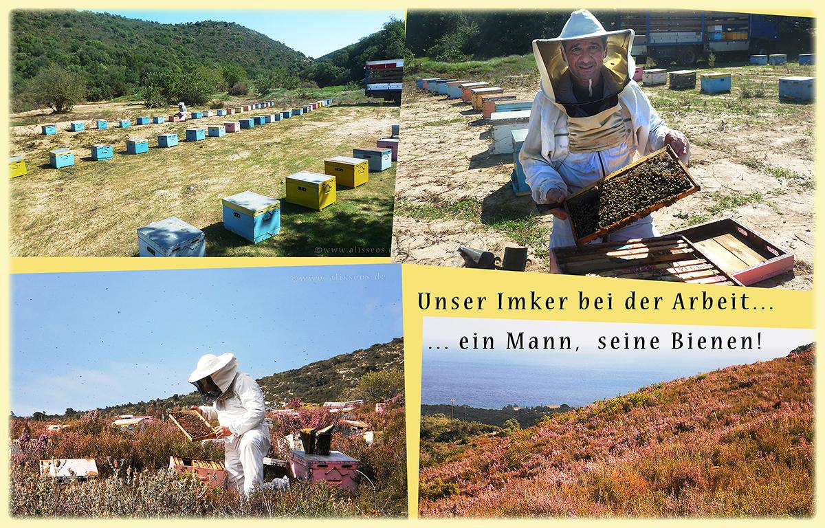 Alisseos - wertvoller Honig aus dem Süden Griechenlands