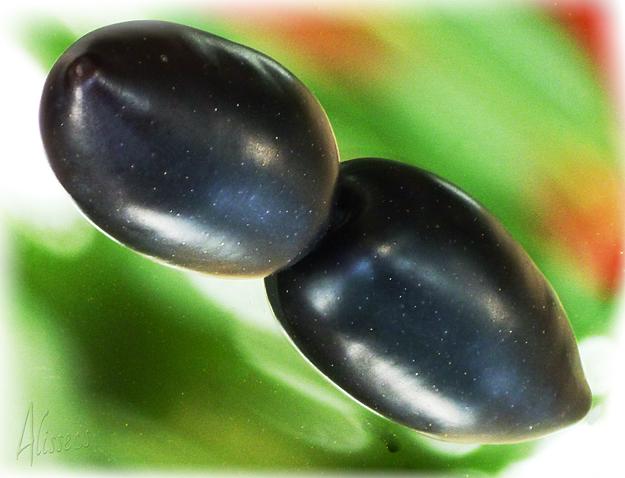 Berühmt ESS OLIVEN   Kalamata Oliven ungefärbt, Kalamon Oliven, Ess-Oliven @YH_19